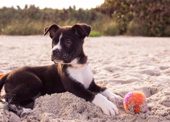 Playas para mascotas en Valencia